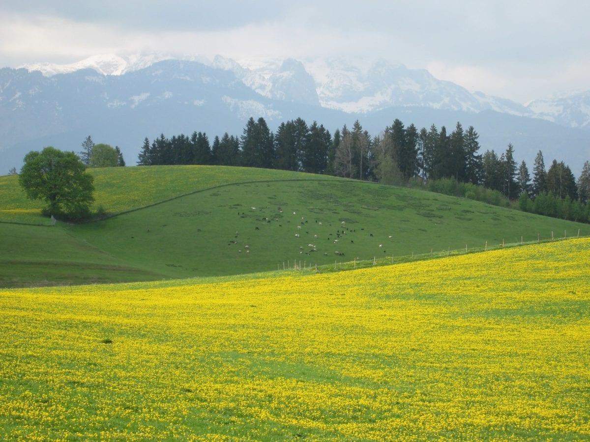 βουνοπλαγιά, σύννεφο, δέντρο, ύπαιθρος, καλοκαίρι, χλόη, φύση, μπλε ουρανός, τοπίο
