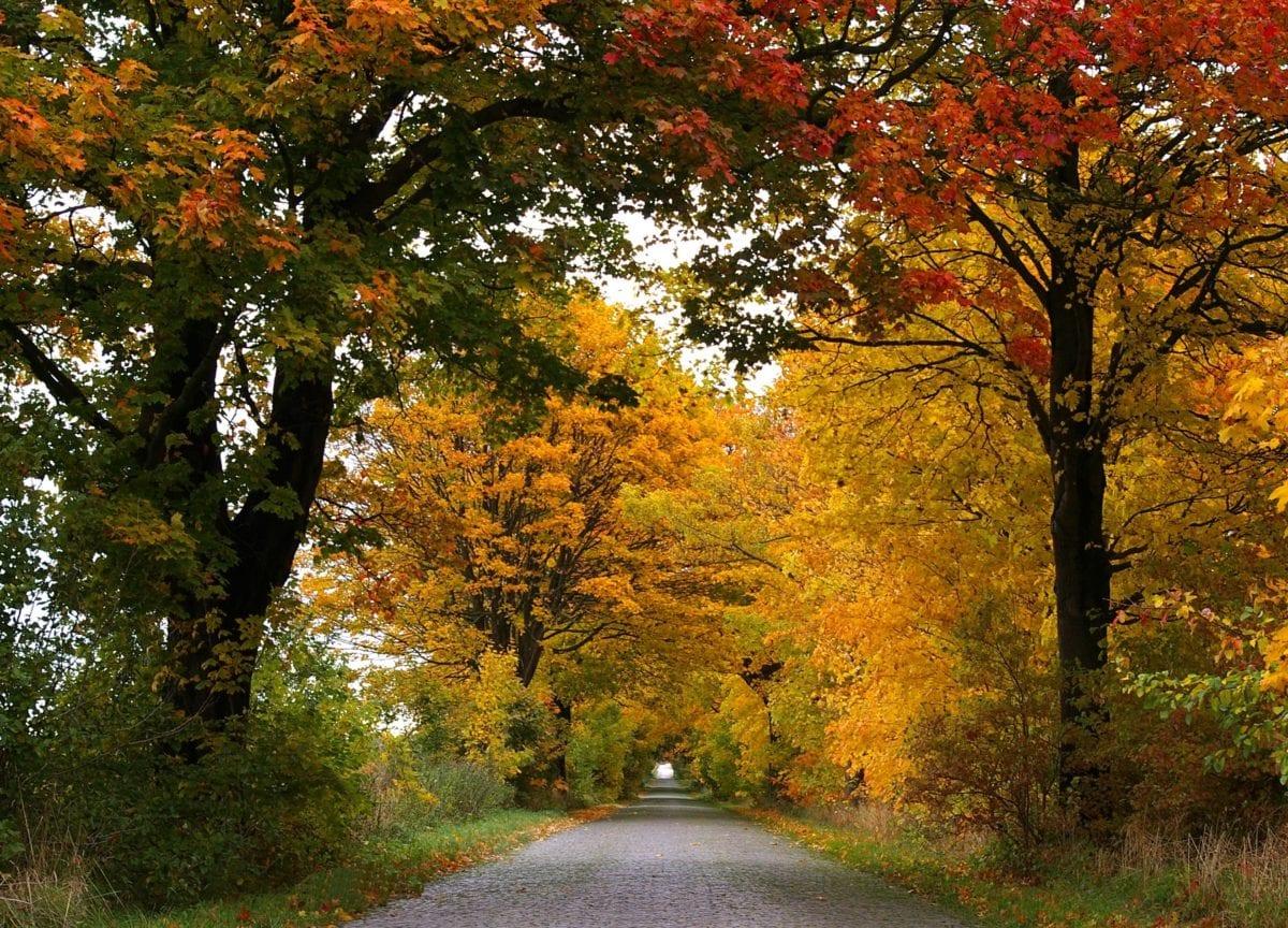 leaf, tree, nature, landscape, wood, autumn season, forest road, foliage