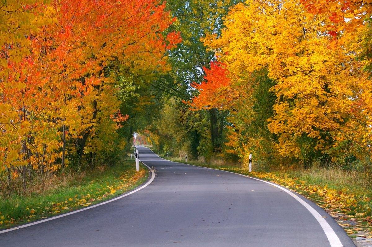 φύλλο, ξύλο, άσφαλτος, δέντρο, τοπίο, δασικός δρόμος, φύση, Acacia
