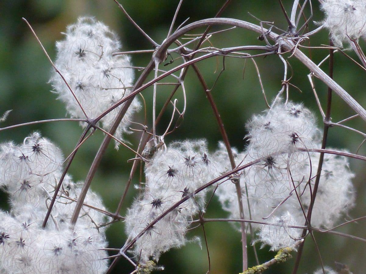 semilla, naturaleza, ecología, verano, jardín, hierba