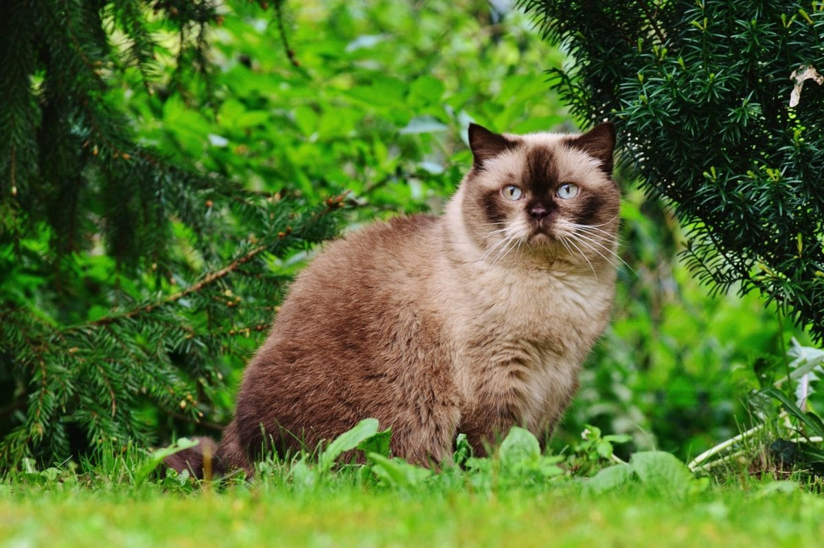 green grass, nature, kitten, cat, feline, kitty, fur, cute, whiskers