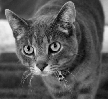 cute, eye, portrait, fur, domestic cat, monochrome, kitten, whisker, animal, feline