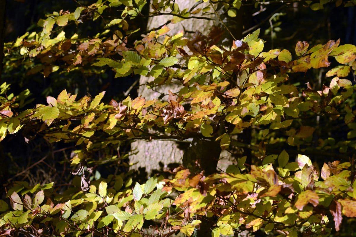 leaf, tree, garden, nature, plant, autumn, foliage, forest