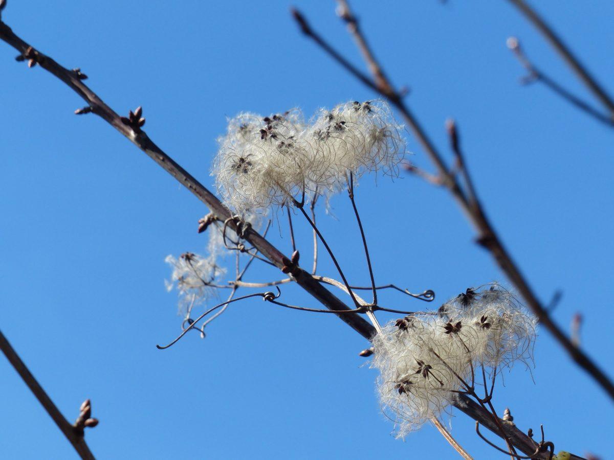 άνοιξη του χρόνου, υποκατάστημα, φύση, δέντρο, μπλε ουρανός, βότανο, οικολογία