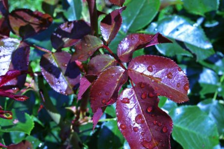 nature, green leaf, rain, dew, plant, branch, shrub, moisture, ecology