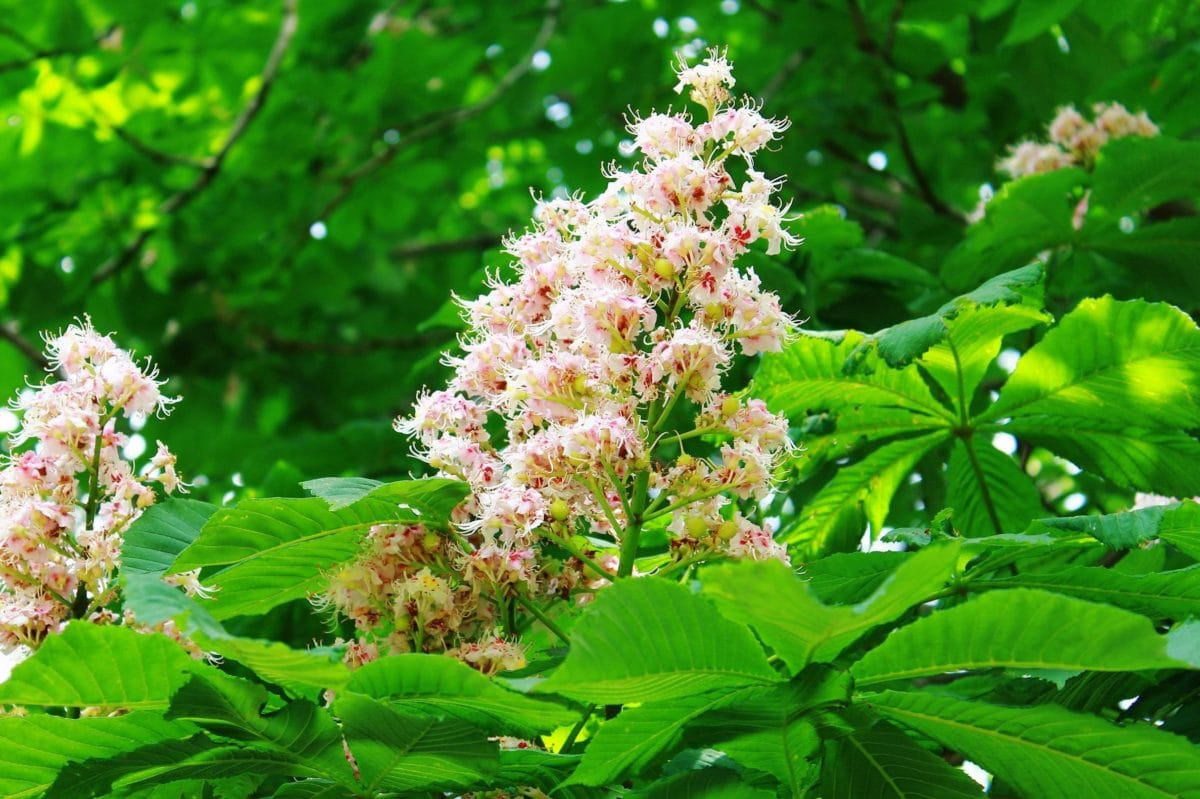 nature, garden, leaf, summer, flower, plant, seed, branch, ecology