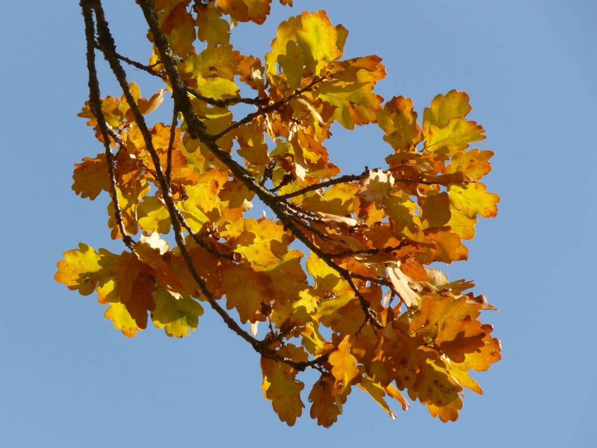 dry leaf, nature, branch, tree, blue sky, herb, autumn season, forest, foliage