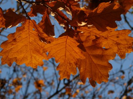 tree, nature, brown leaf, autumn, foliage, forest, branch, autumn season