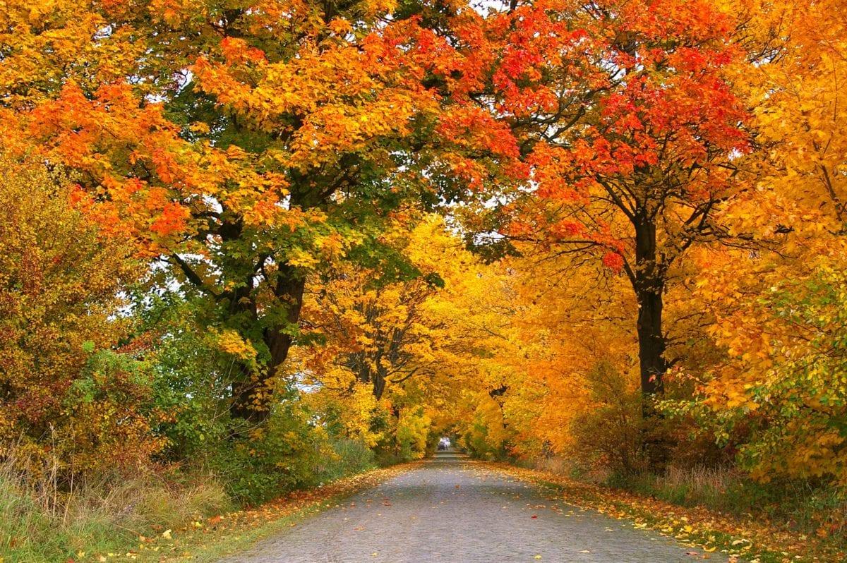 tree, nature, wood, leaf, landscape, asphalt, autumn, forest