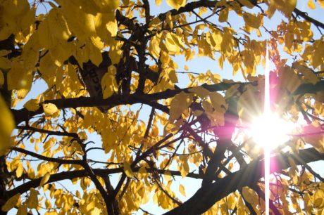 soleil, branche, nature, feuille, branche, arbre, plante, automne, forêt, feuillage