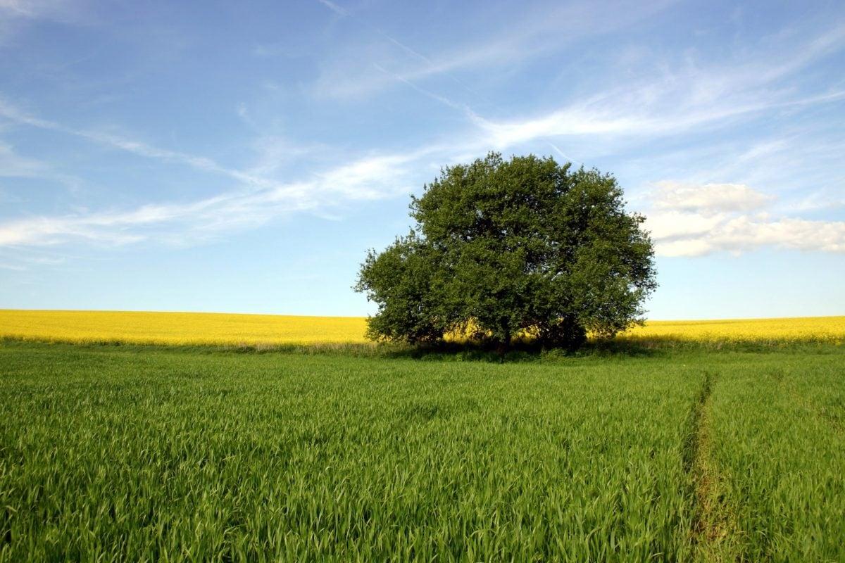 příroda, strom, zemědělství, krajina, pole, krajina, letní sezóna