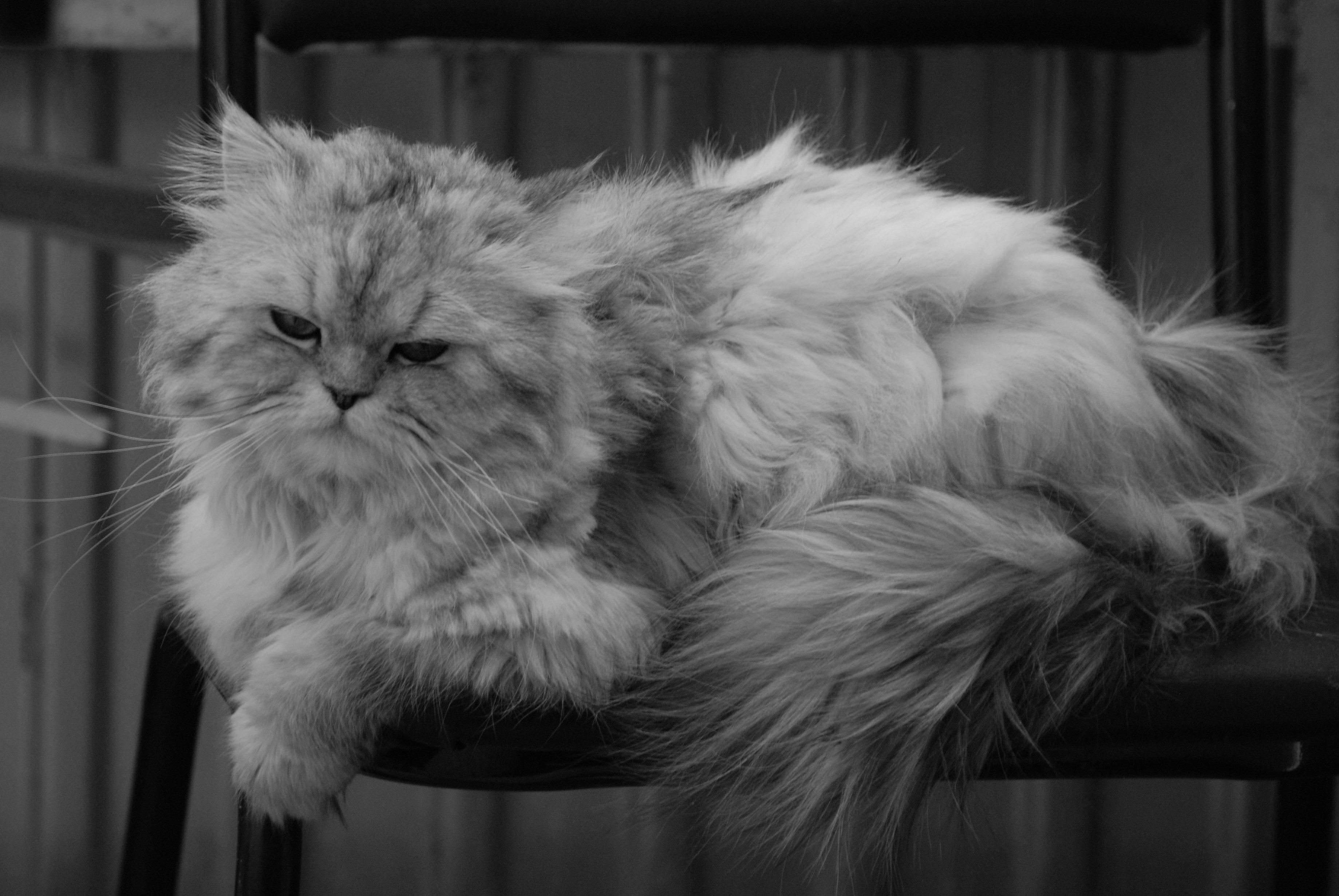 Inzerát v kategorii Kočky a koťata: Mladá kočička (WDJ2WD).