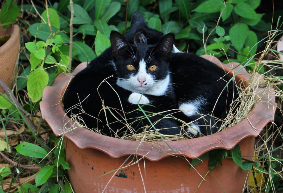 сладък, природа, котка, Черно коте, животно, котешки, коте, кожа, Градина