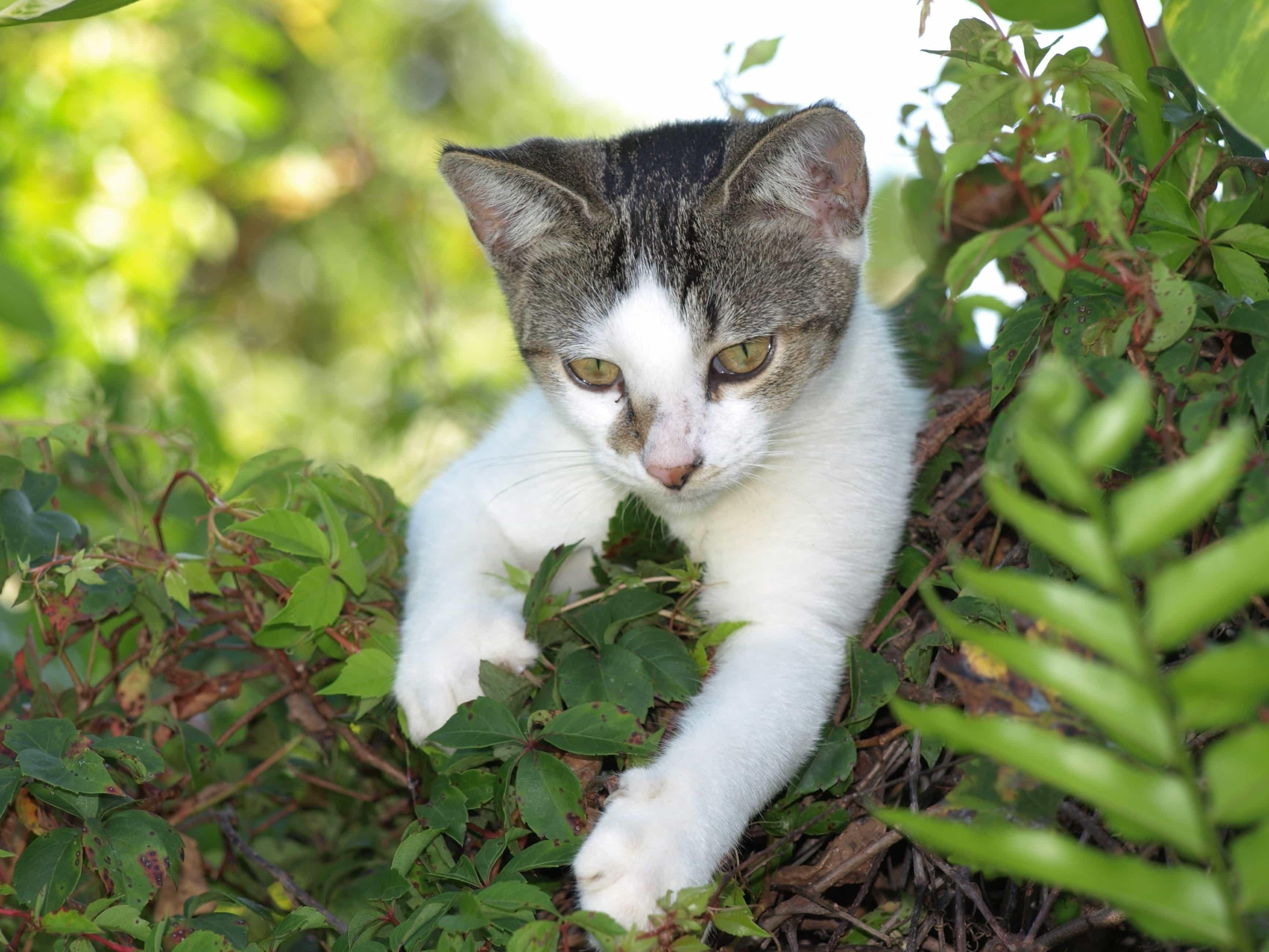 Stiahnite si zdarma ohromujúce obrázky o Úsmev Mačka.