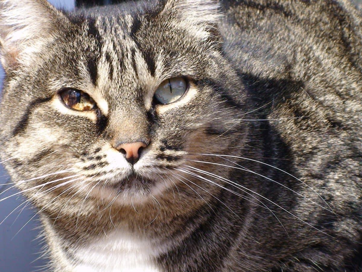 mačička obrázkov