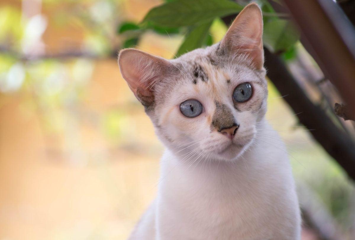 gatito juguetón, animal, ojo, lindo, gato blanco, retrato, piel blanca, nariz, barba, cabeza