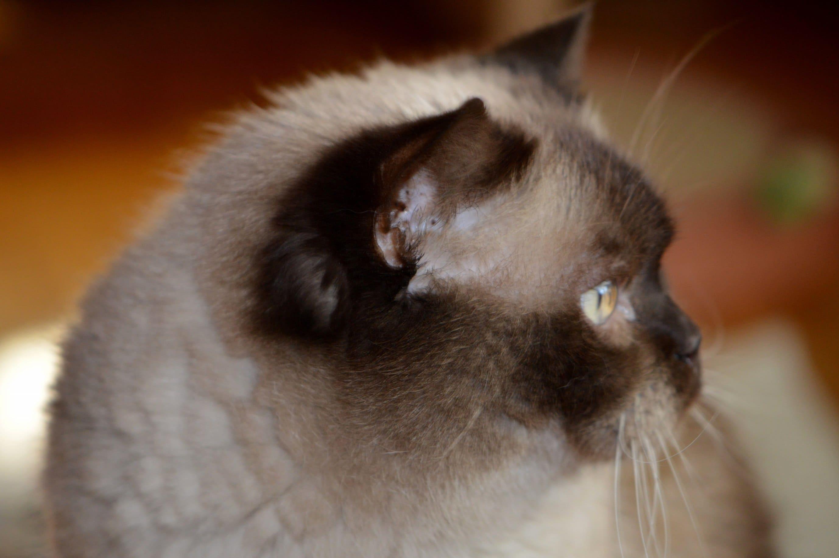 Bezplatne mačička pics.com