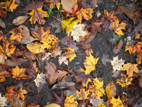 wood, tree, leaf, nature, autumn, ground, herb, forest, outdoor