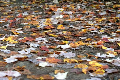 leaf, texture, abstract, pattern, ground, ecology, autumn season