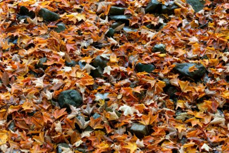 environment, ecology, landscape, nature, ground, yellow leaf