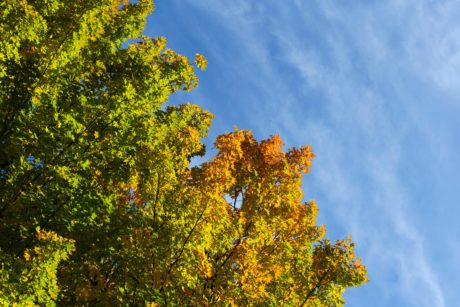 wood, tree, leaf, nature, autumn, plant, forest, landscape, blue sky