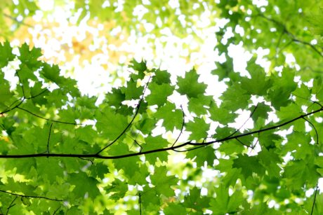 wood, green leaf, nature, environment, sunshine, tree, branch, plant, forest