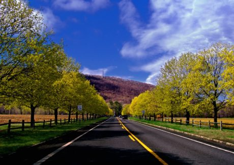 albero, paesaggio, strada, legno, asfalto, colza, superstrada