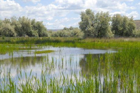 roseau, herbe, eau, marécage, nature, paysage, lac, réflexion