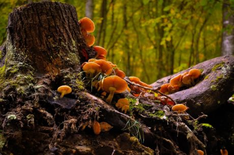 mossa, natur, trä, svamp, träd, löv, svamp