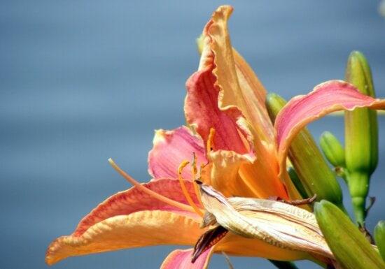 leaf, summer, nature, flower, lily flower, plant