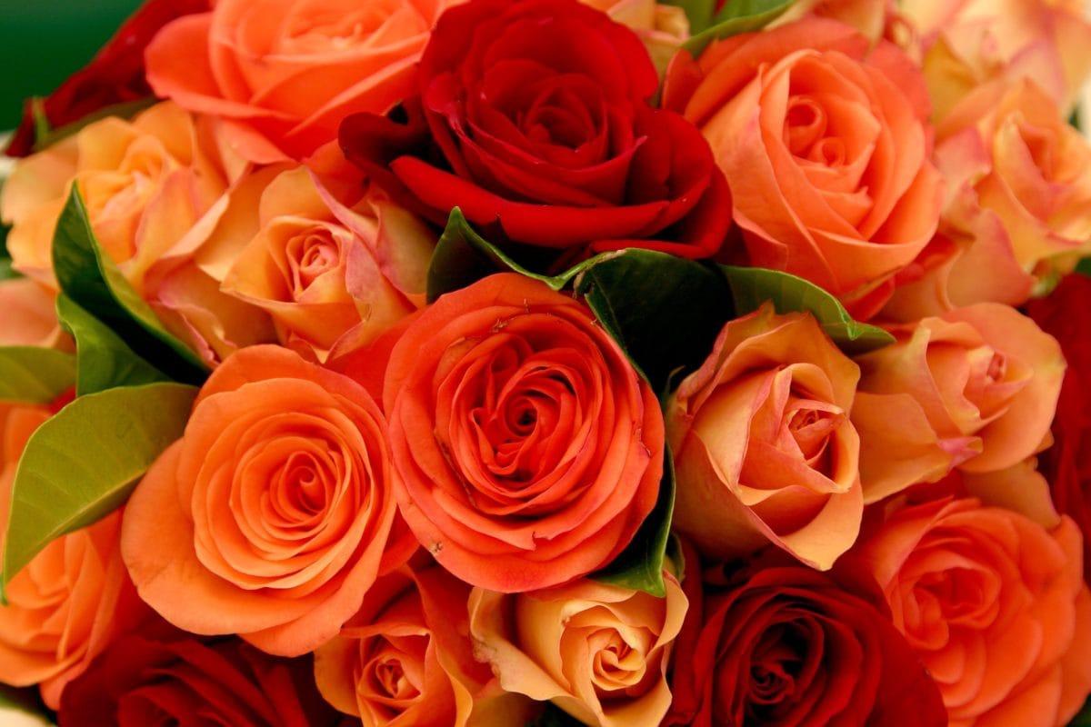 bunga, karangan bunga, kelopak, mawar, pengaturan, kelopak, blossom, tanaman