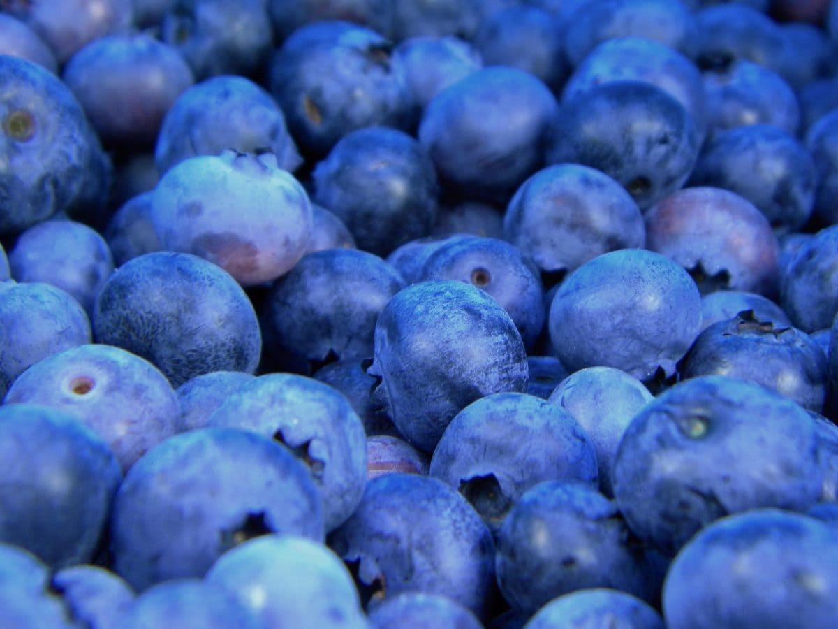 зърна, плодове, антиоксидант, органични, синьо, на храните, на открито