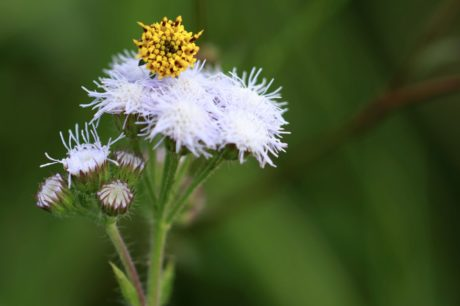 alam, ramuan, tanaman, bunga, bunga, Taman, mekar, rumput
