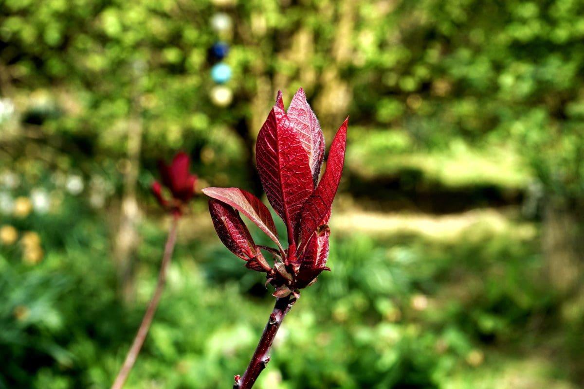 strom, větev, příroda, jarní tiem, bylinkový list