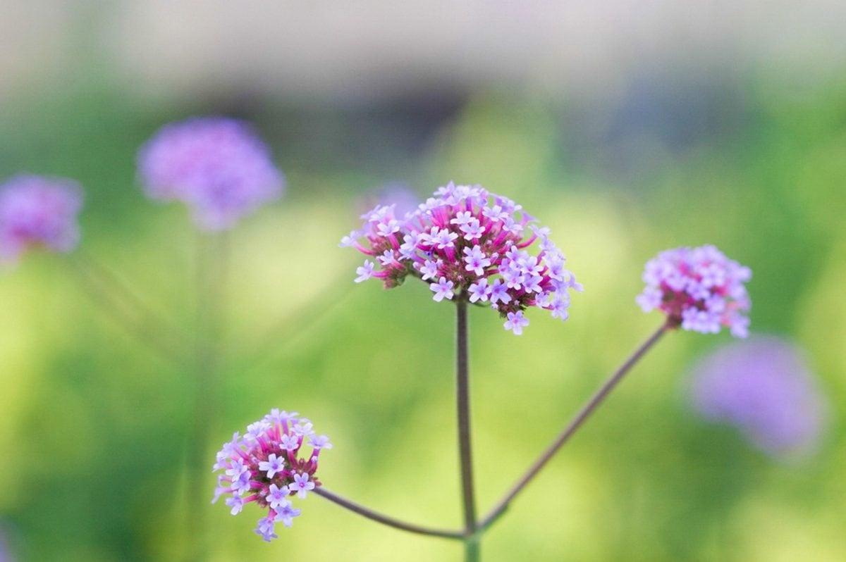 leaf, flower, summer, garden, nature, herb, ecology, pink, blossom