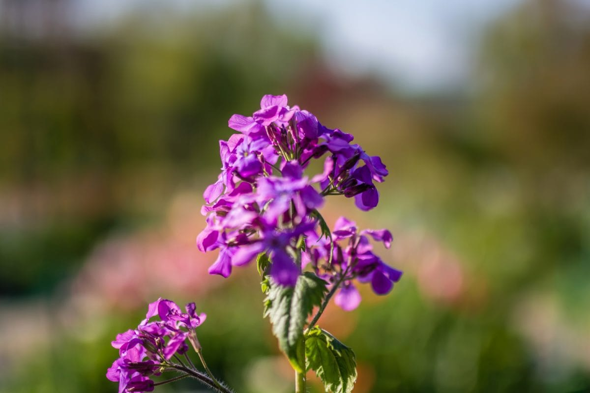 zomer, blad, Tuin, bloemenveld, bloem, natuur, plant