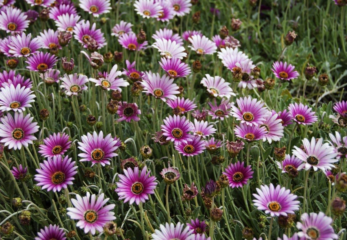 nature, flower field, summer, petal, plant, blossom, garden, bloom