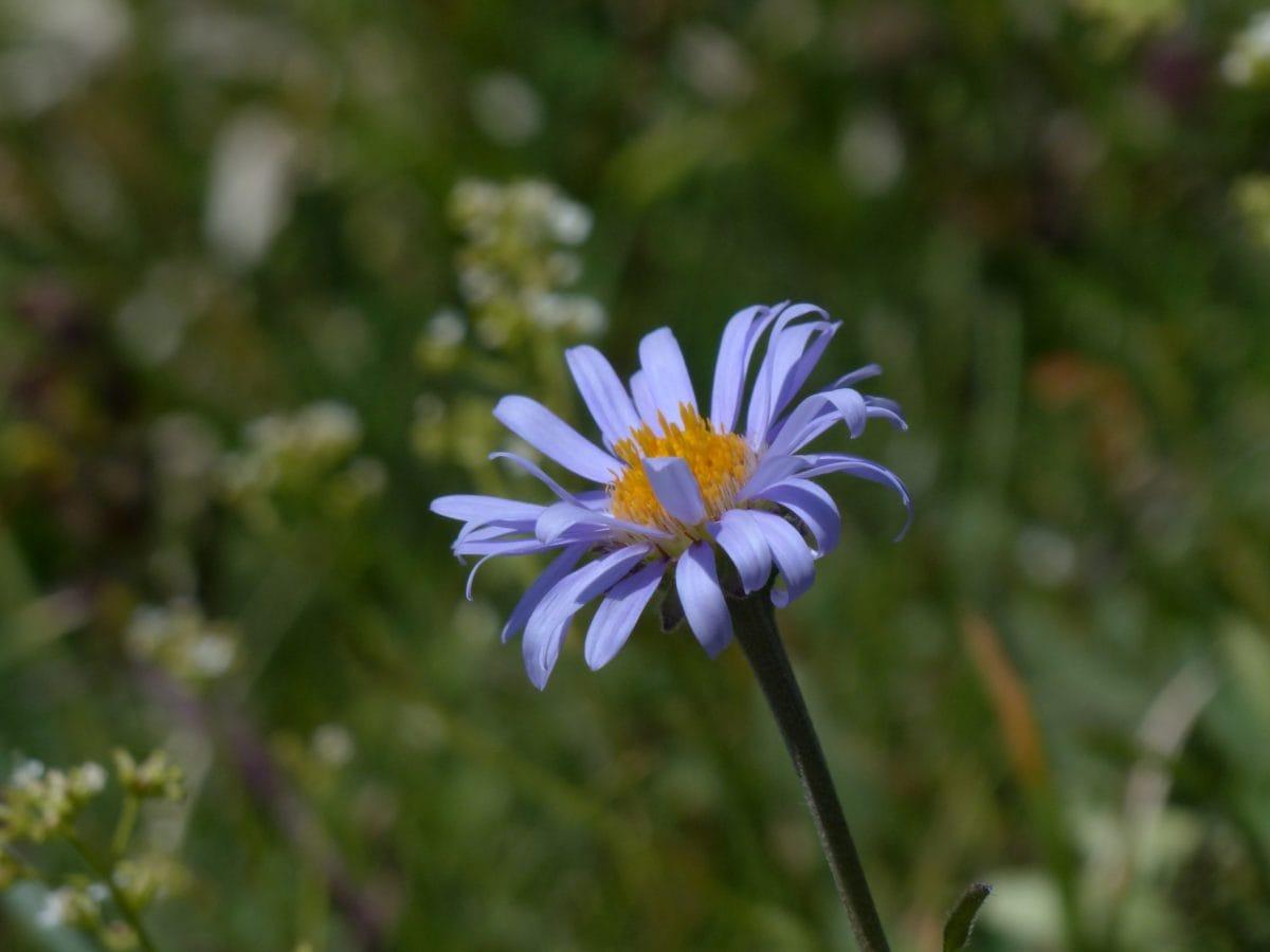 flower field, meadow, summer, leaf, nature, garden, plant, blossom, petal