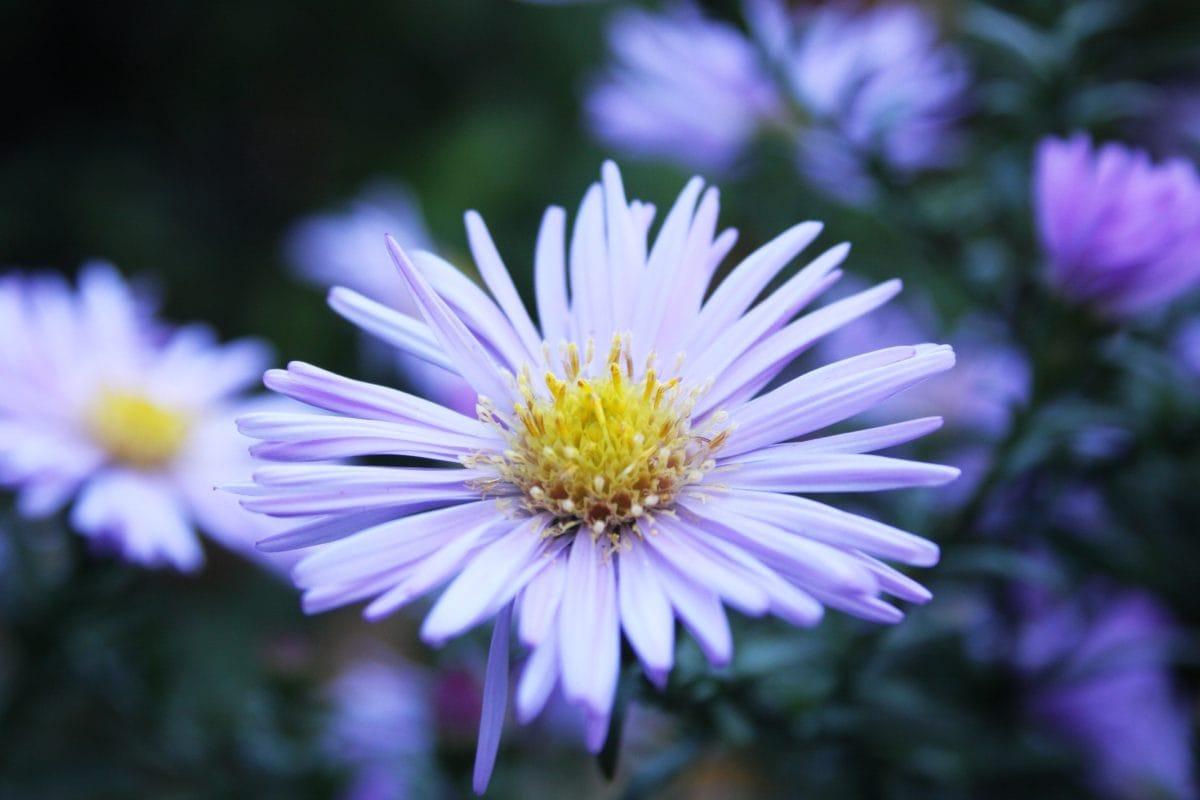 petal, nature, garden, summer, flower, leaf, blossom, plant