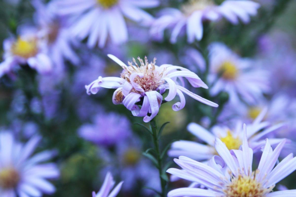 musim panas, daun, alam, Taman, kelopak bunga, bunga, Lapangan, mekar