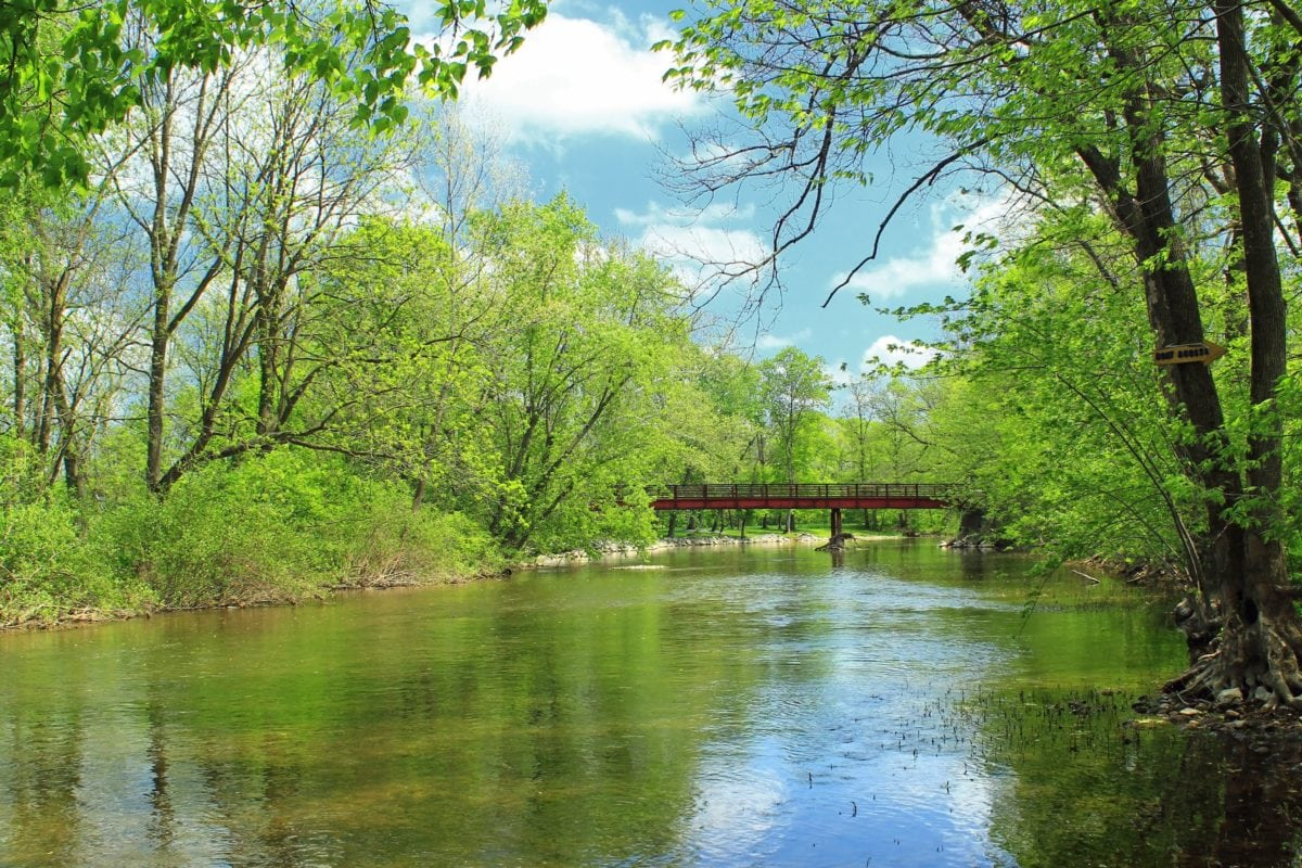 δέντρο, τοπίο, φύλλο, καλοκαίρι, νερό, Ποταμός, φύση, ξύλο