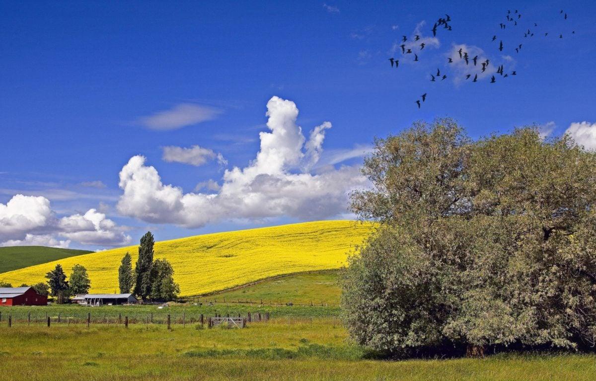 countryside, landscape, field, agriculture, tree, hillside, bird flock, nature, blue sky