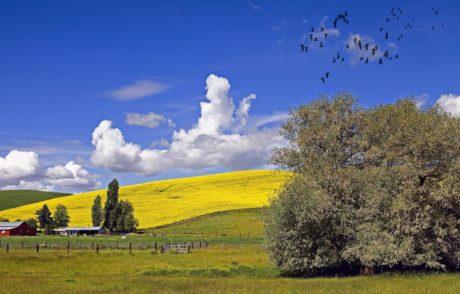 乡村、风景、田野、农业、树木、山坡、鸟群、自然、蓝天