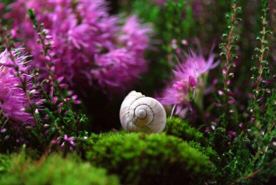 jardim, grama, verão, natureza, folha, flor, caracol, gastrópode