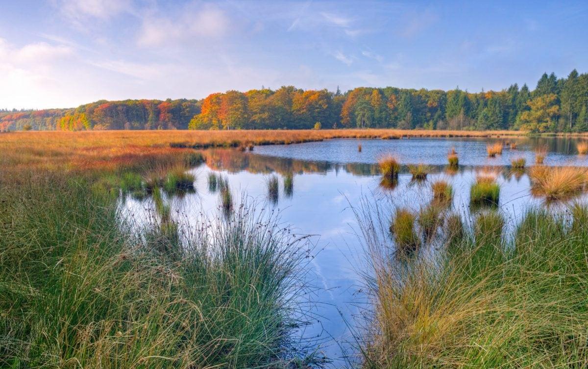 swamp, ecology, marshland, salt marsh, nature, landscape, river, reflection, water, lake, blue sky