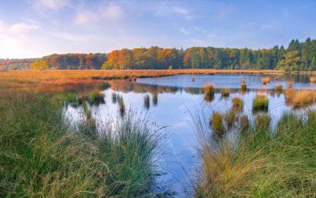 bažina, ekologie, bažiny, solná bažina, příroda, krajina, řeka, reflexe, voda, jezero, modrá obloha