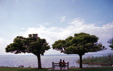 arbre, eau, paysage, banc, extérieur, ciel bleu, horizon, nuage