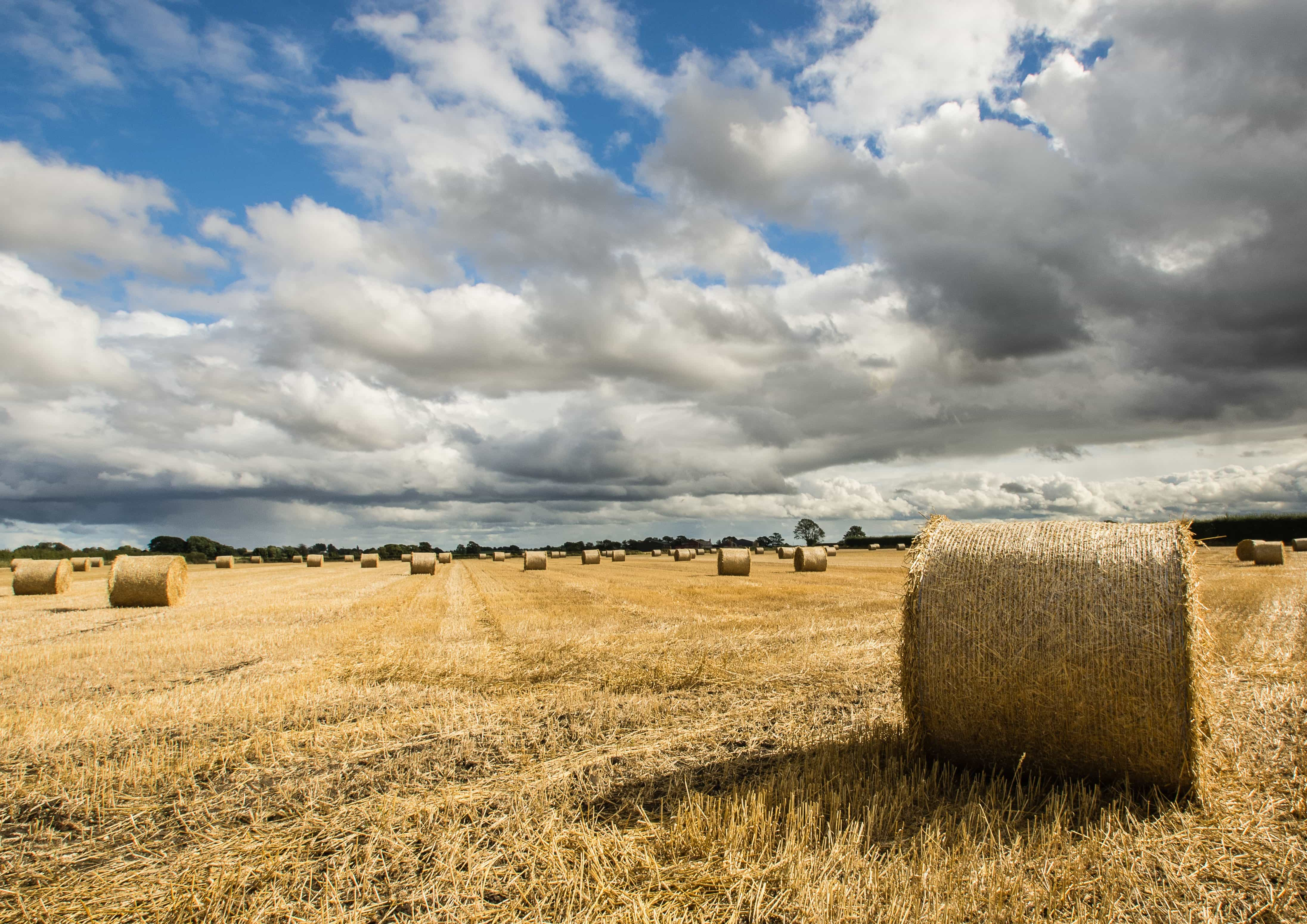 Free Picture Straw Cereal Hay Haystack Rye Field