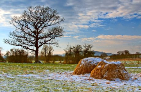 landscape, tree, nature, hay, field, haystack, blue sky, outdoor, cloud, snow