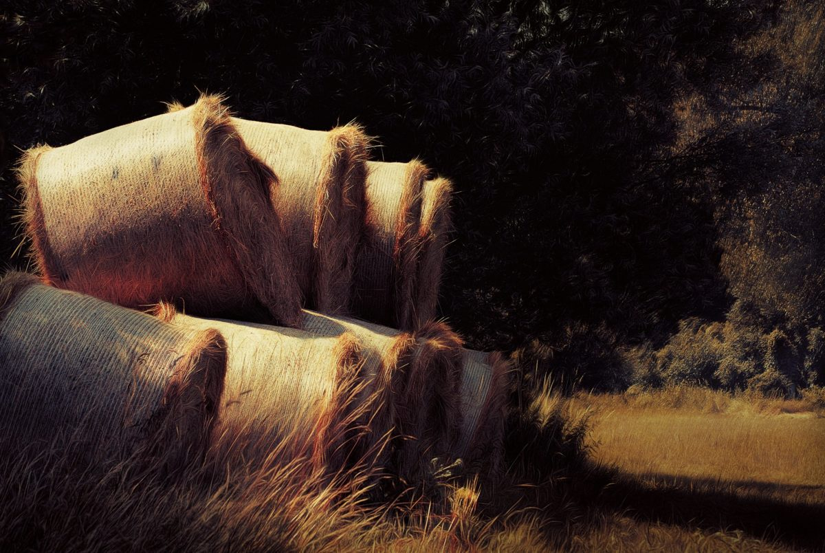 трева, селско стопанство, сено, сянка, поле, на открито